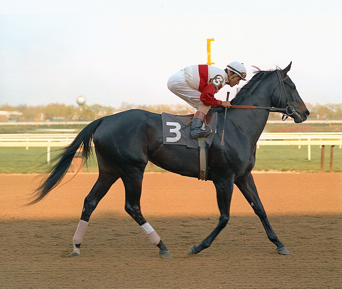 This photograph pictures Ruffian and Jacinto Vasquez parading to the post in the Acorn Stakes. Track Photo.