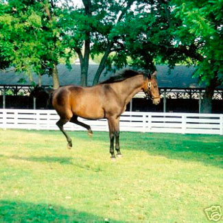 John Henry full of kick in the paddock (Photograph of John Henry by Tammy Siters, from her private collection)