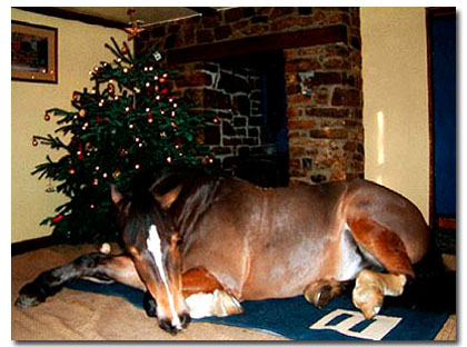 What, is that a horse under that Christmas tree? Google image.