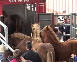 Horses being transported for slaughter. Photo Digital News Agency.