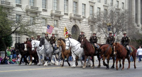 Horses on parade in Washingdon DC. St Patrick's Day 2008. Photo: Vivian Grant Farrell.