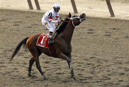 What Does Pulled Up Mean In Horse Racing