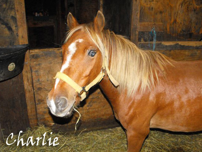 Charlie the Blind Pony who found his Angels