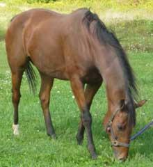 Mercy now. Horsenet Horse Rescue