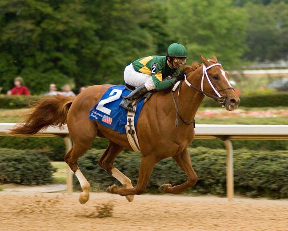 Curlin, The Golden Warrior, winning the Arkansas Derby. Source of photograph unknown.