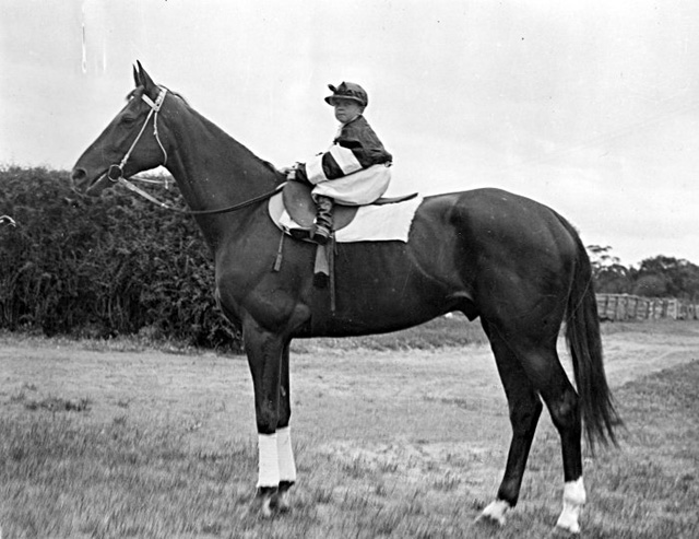 Mystery of Phar Lap's death solved (AU) – Tuesday's Horse