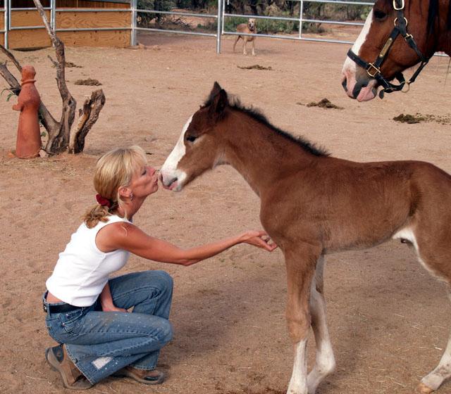 Rescue Me: Equine Voices and Sanctuary (Arizona) – Tuesday's Horse