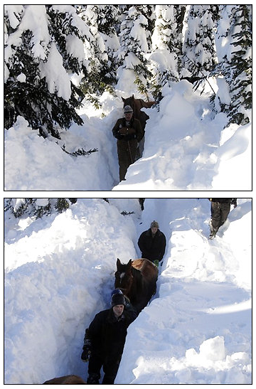 In these photos provided by Marc Lavigne via The Canadian Press, rescuers lead the horses down the 1 km long trench that volunteers dug in six feet of snow near McBride, B.C., Tuesday Dec. 23, 2008. Two frostbitten, emaciated horses spent Christmas inside a warm barn after they were rescued from deep snow in northeastern B.C. Volunteers spent days digging the animals out of the snow. (AP Photo/The Canadian Press/HO) (Marc Lavigne - AP)