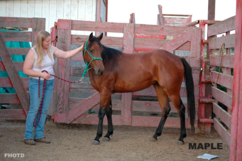 Maple. If the story is true, this sweet filly's flanks ended up on somebody's dinner plate.