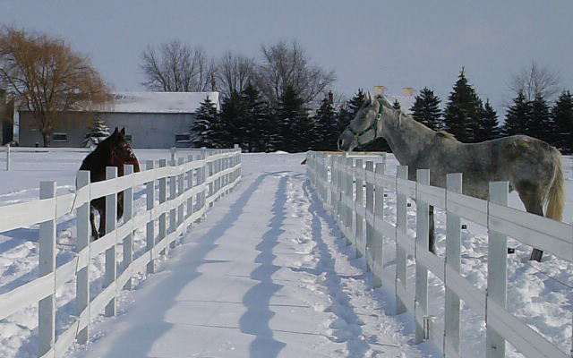 Two horses taken in by New Horizons Equine Center just outside Dresden, Ontario, Canada get acquainted in snow-covered paddocks.  Owned and operated by Claudette Lemesurier, the center focuses on re-training and finding homes for off-the-track Standardbreds.