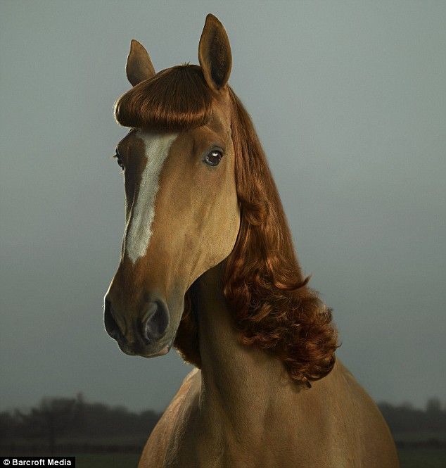 Horse Hair Extensions Tuesdays Horse