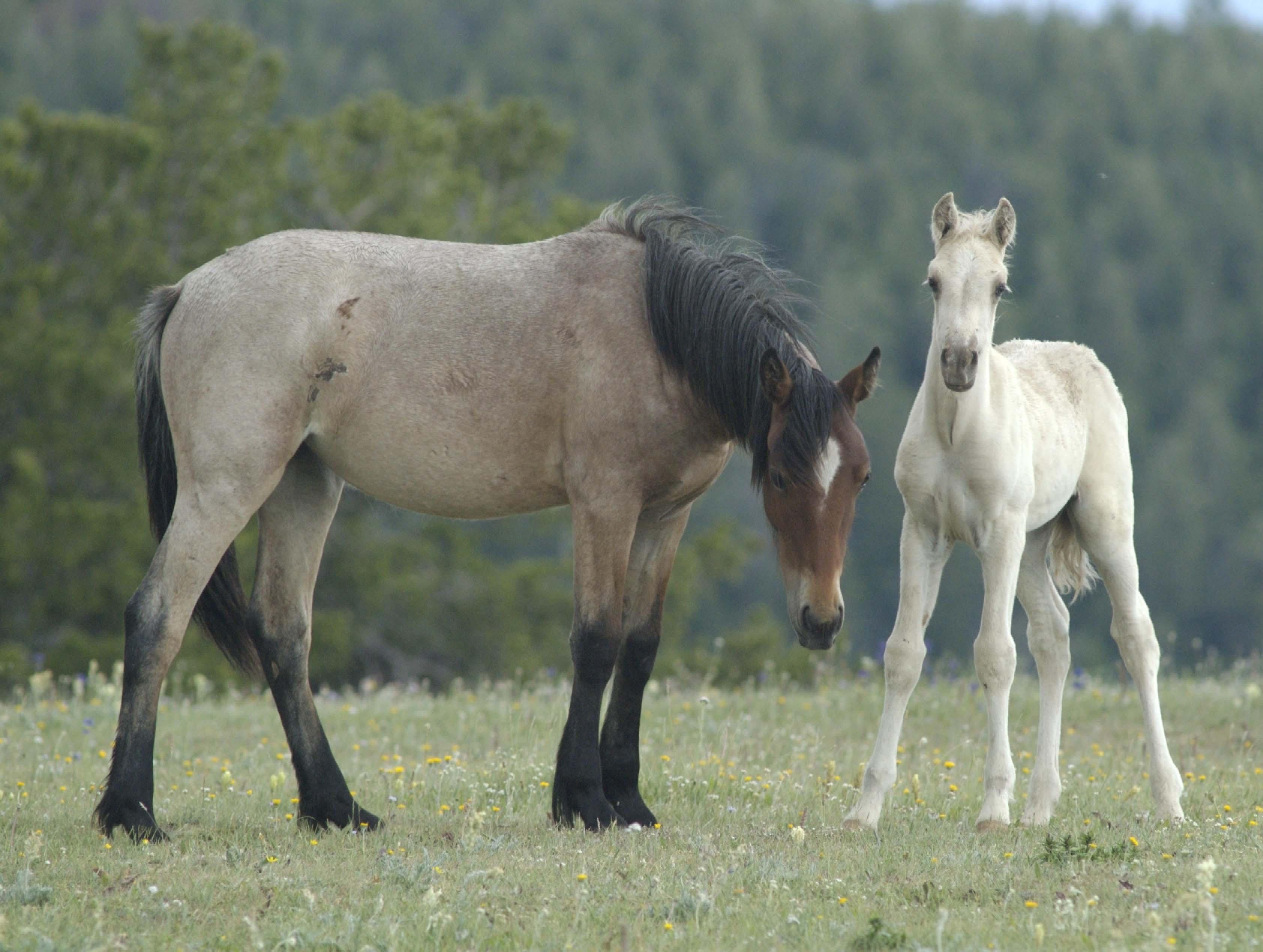 Wild horses, life at will