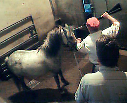 Slaughter of the horses more animals shot as recession for Where can i go horseback riding near me