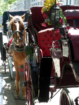 Carriage horses. New York City. Vivian Grant Farrell. 2010.