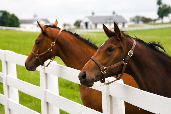 FI_Two_Horses_Pasture