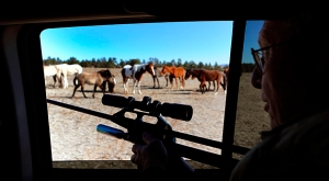 Jay Kilpatrick darts wild mares with PZP
