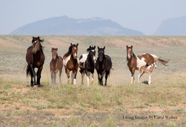 wild horse single guys I need to kill a wild horse  can you guys help me out i need to kill a wild horse and i've  where can i find wild horses in red dead redemption.