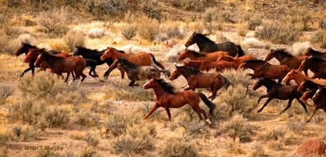 Wild mustangs running free by Brian Murphy