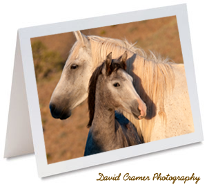 Mustang Mare and Foal. Cropped from an image by David Cramer Photography 2009.
