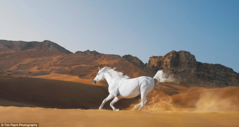 Wild Stallion Utah