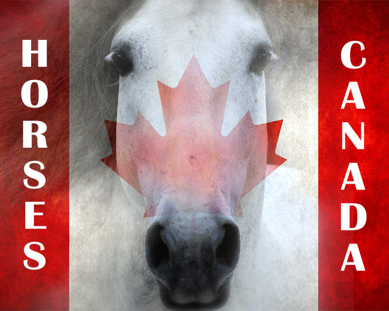 Horses Canada Artwork by VGFarrell