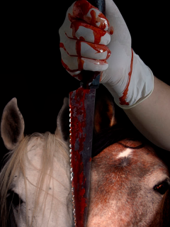 Horse Slaughter Poster by Vivian J Grant