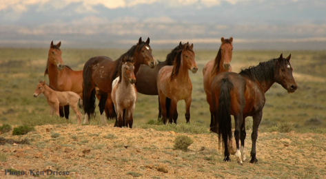 Wild Horses Wyoming by Ken Driese