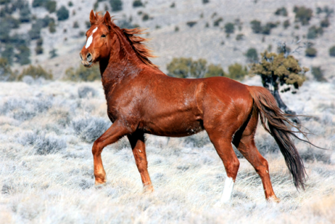 Wild Horse. Photo (c) Terry Fitch.