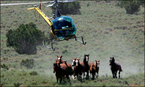 Wild horse helicopter roundup by Justin Sullivan / Getty Images.