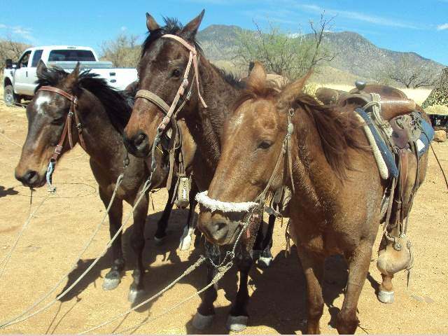 Federal agents find horses smuggling pot   TUESDAY'S HORSE