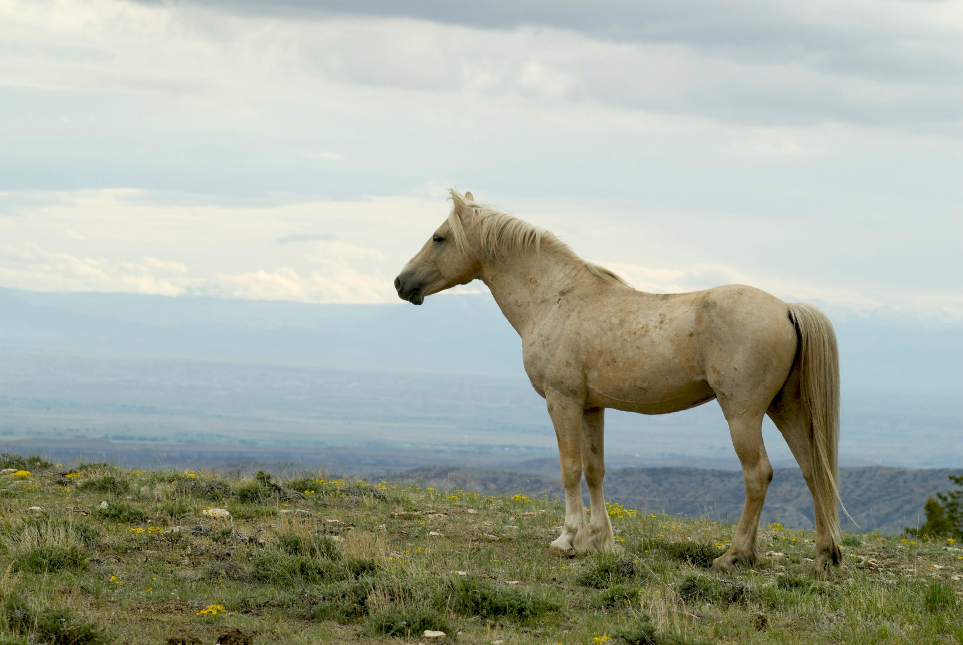 Pryor Mountains Wild Horse Adoption Set For Sept 8
