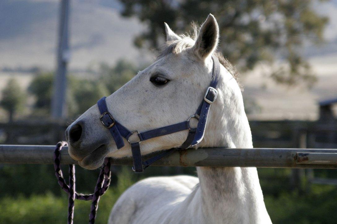 Horse in profile.