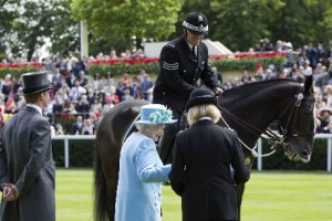Clyde, Thames Valley Police Horse