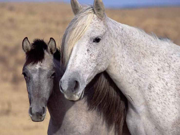 Mustang Mare and Foal. Unaccredited Google search result image.