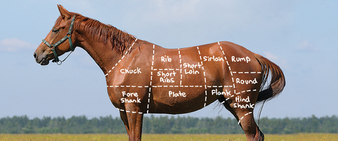 Horse Meat Diagram