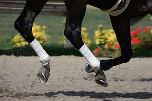 A horse gallops on the artificial surface at Del Mar racecourse.