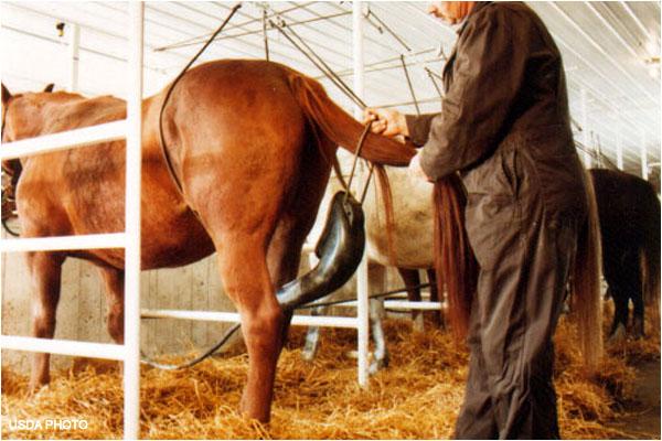 USDA Image PMU Horses