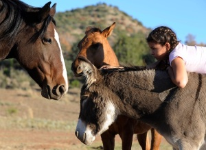 A rescued burro provides a comfy back for a child on a Texas ranch.  (AP Photo/Pat Sullivan)