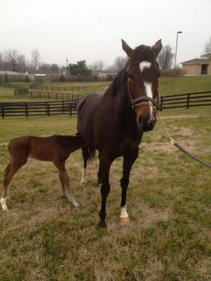 Rachel Alexandra and her Curlin foal.