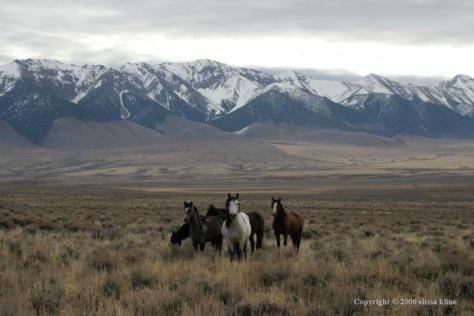 Challis Mustangs by Elissa Kline