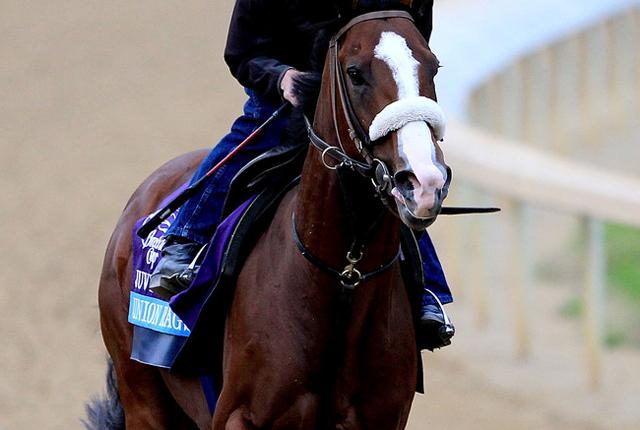 Union Rags Racehorse