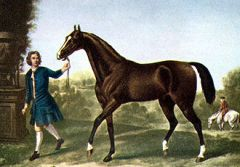 Painting of the Darley Arabian