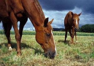 Horses Graze in an Approaching Storm