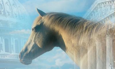 Horse on the Hill. Vivian Grant Farrell.