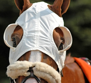 Racehorse in blinkers. Google image.