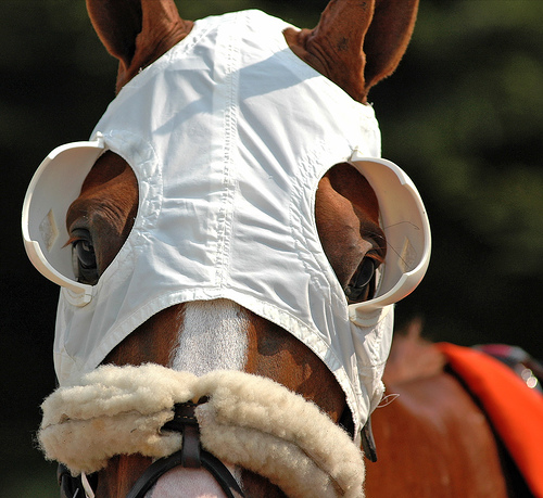 Racehorse in blinkers. Sarah K. Andrew.