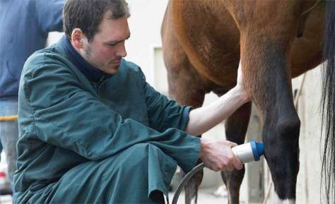 Electrocorporeal shock wave therapy treatment being administered to a horse. Image from ESWT.net.