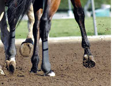 A racehorse steps onto the track during training. Image by Clarence Alford.