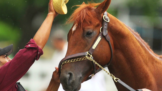 2012 Triple Crown hopeful I'll Have Another retired. CNN image.