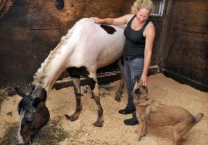 Rescued Bethany mare Cheyenne. Mara Lavitt/New Haven Register